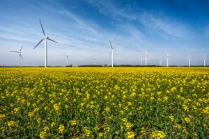 windmills in a field of yellow flowers